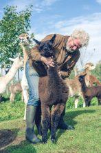 WandelWalhalla-Alpaca