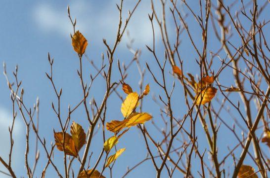 WandelWalhalla-autumn leaves