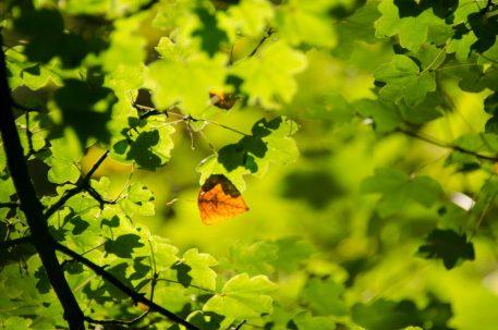 WandelWalhalla-autumn
