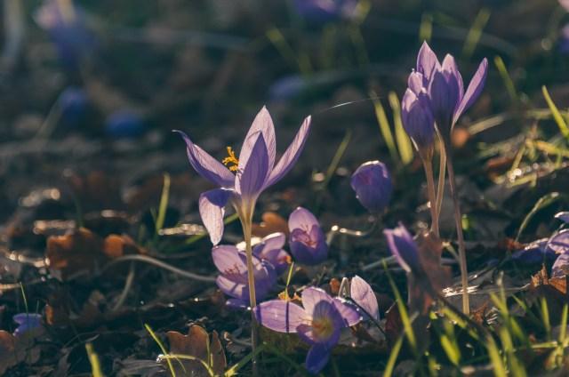 Learn about plants in the Botaniska Trädgården
