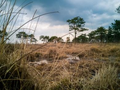 Landscape with mate 10 Pro in Kalmthoutse heide