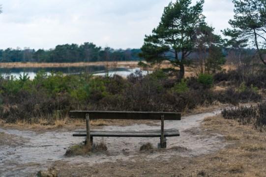 A lonely bench in Kalmthoutse heide