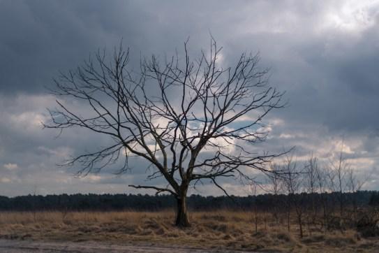 Kalmthout - dead tree