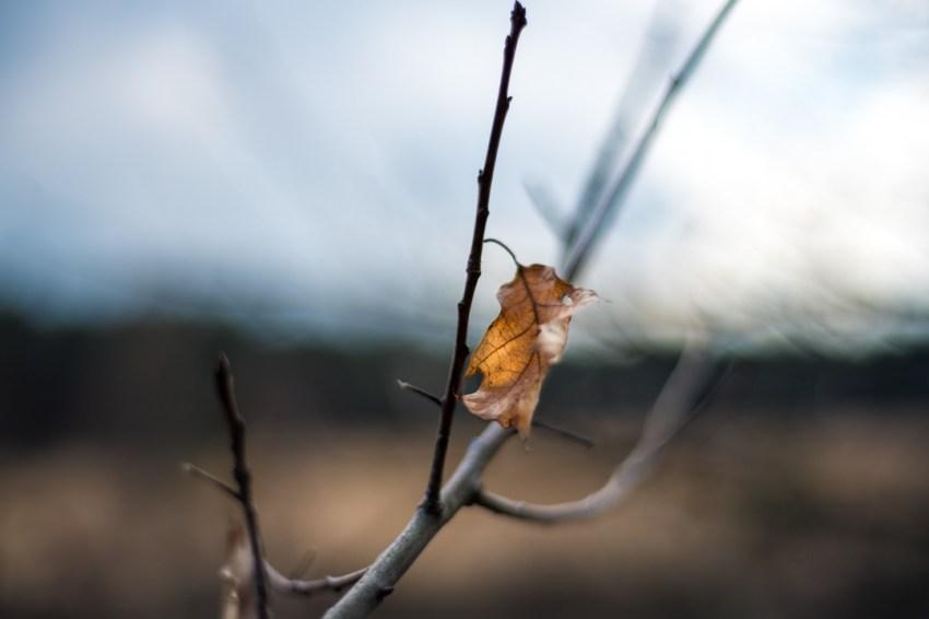 Winter in Kalmthoutse heide