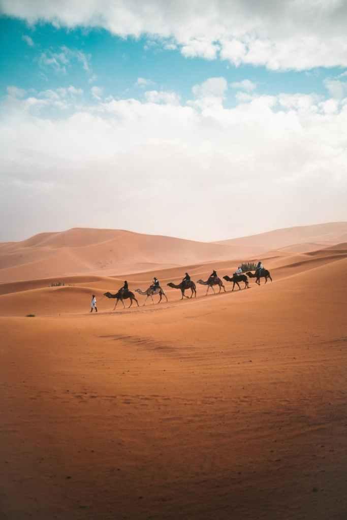photo of camels on dessert