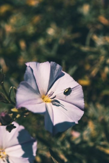 Bug on Malta