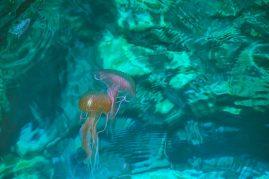 jellyfish on malta