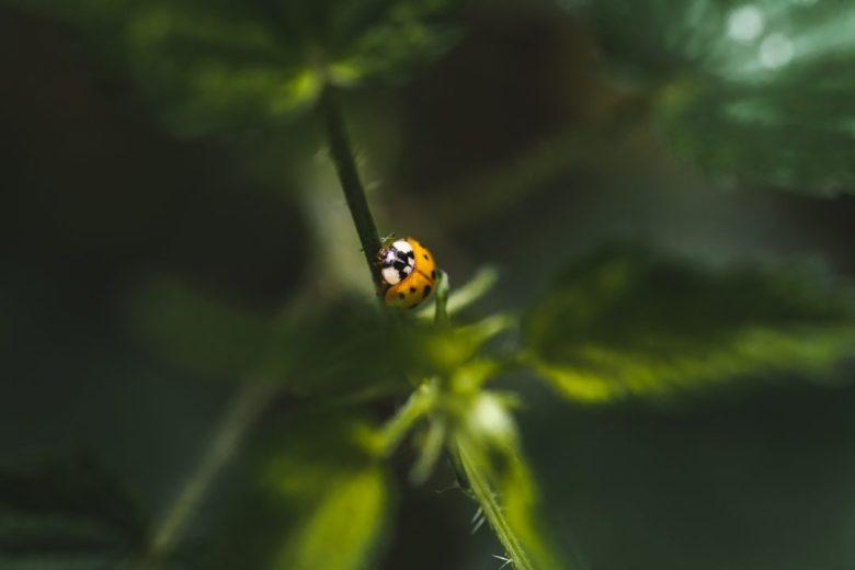 macro photography with insects like ladybugs