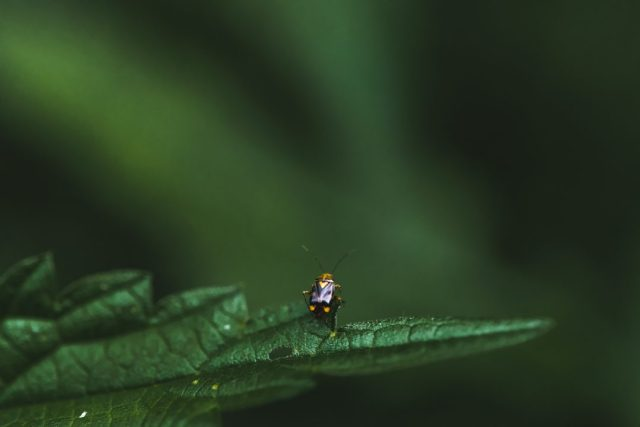 macro photography with insects
