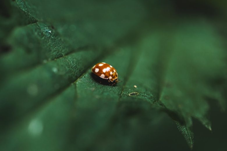 Macro photography with Nikon D850 and 60mm lens