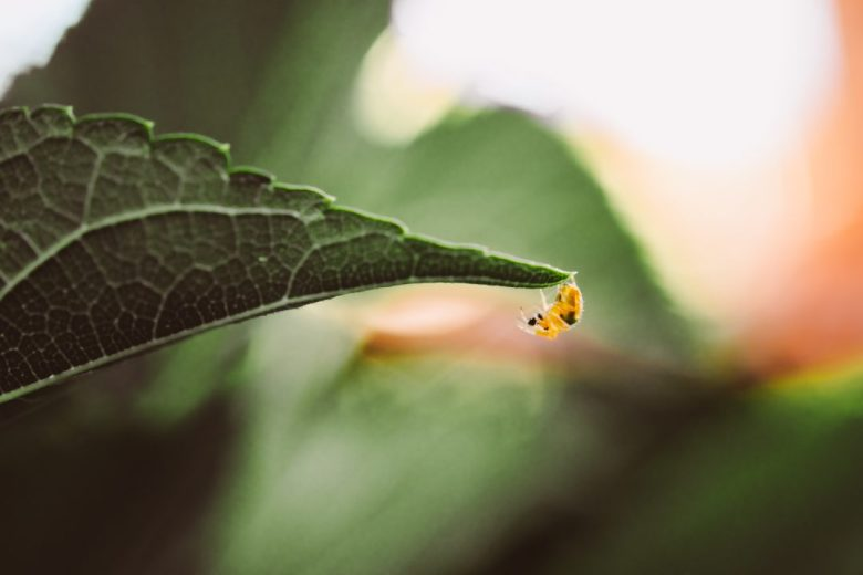 macro photography with insects and spiders