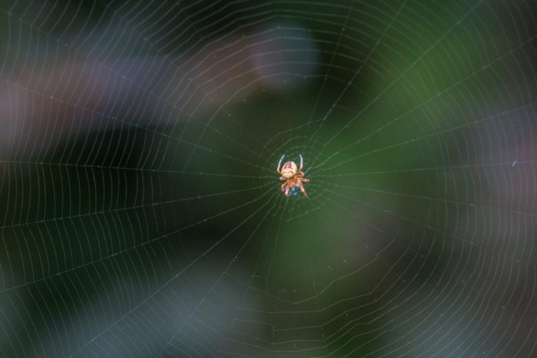 macro photography with spiders