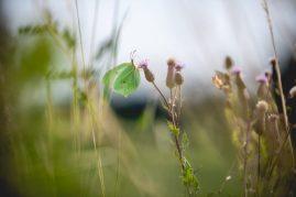 Vlinders - Web-29
