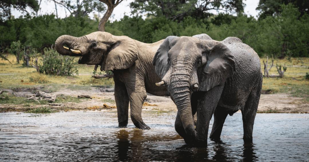 2-week adventure in Botswana: My wildlife and camping adventure Itinerary