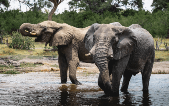 2-week adventure in Botswana: My wildlife and camping adventure Itinerary