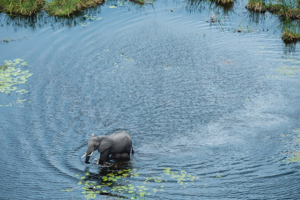 Mother & child elephant in Okavango