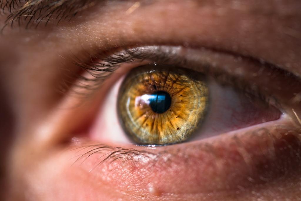 joel staveley eye macro photography
