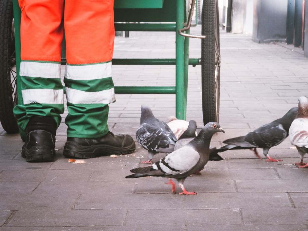 Pigeon's on the street