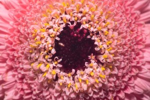 Macro-photo-of-flower