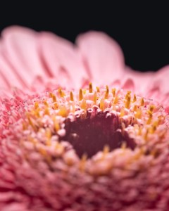 Macrophotography with macro tubes at home