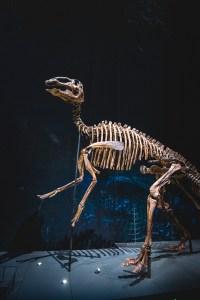 dinosaurus fossil