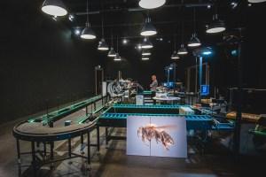 insect fotografie in leiden