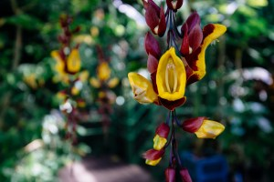 hanging plants in hortus botanicus