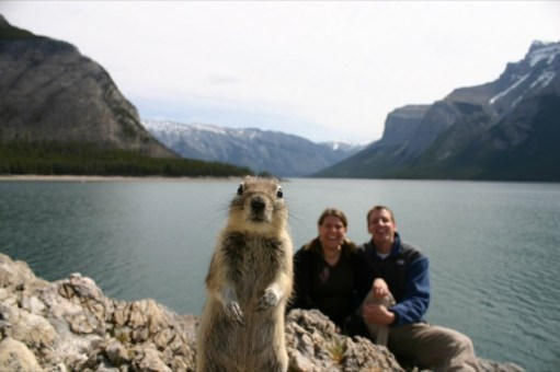 animal-photobombs-01