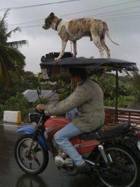 Fredscorner-Funny-Pictures-Transportation-26