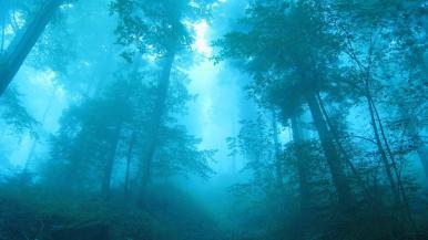 Fredscorner - Forest