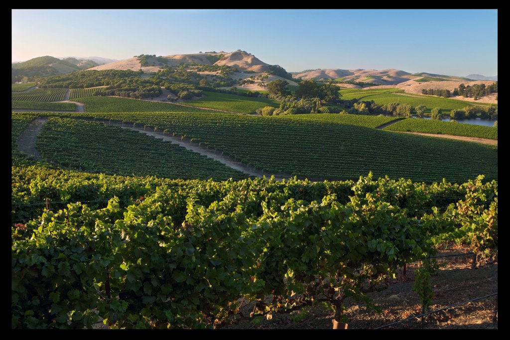 Highlights from Carneros: Capsule Reviews 90–93pts