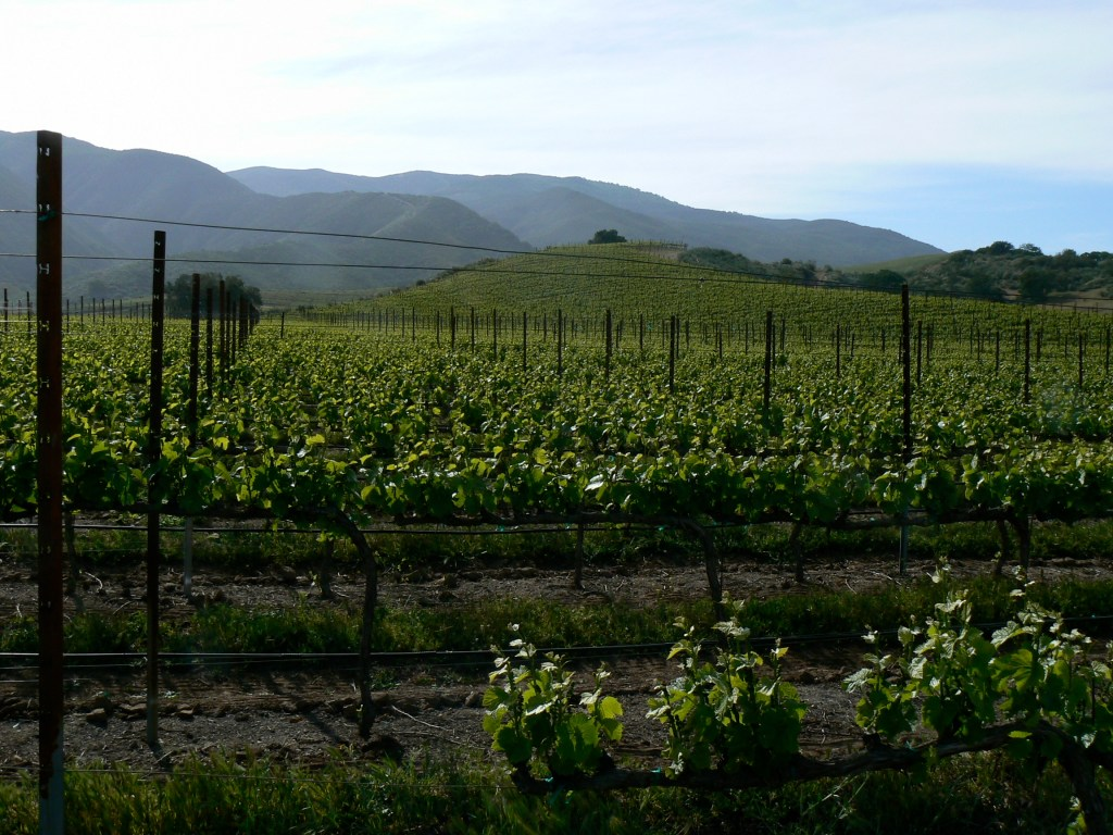 What Everyone Should Know About the Santa Lucia Highlands AVA