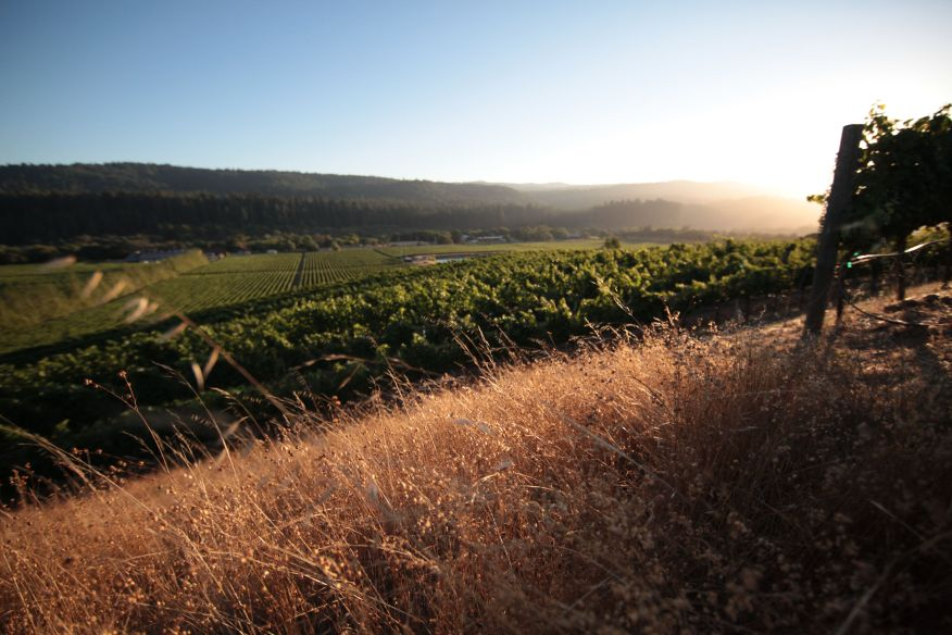 FEL Pinot Noir Savoy Vineyard