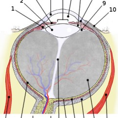 Label The Eye Diagram Answers Usb B Wiring Quizlet Great Installation Of For Quiz Rh 36 Yoga Neuwied De Without Labels