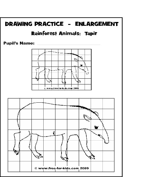 Drawing Pages Of Rainforest Animals Www Free For Kids Com