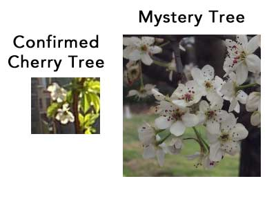tree-comparison