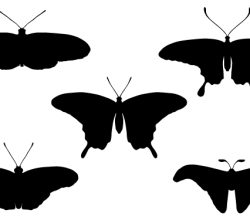 Vector Butterfly Silhouettes