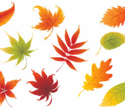 Colorful Vector Leaves