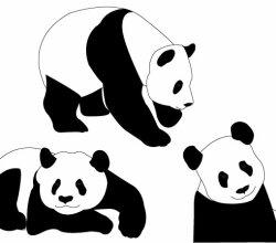 Panda Bears Vector