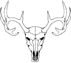 Deer Skull Free Vector Image