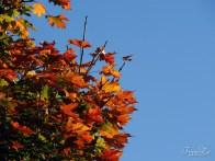 Fantastické barvy podzimu