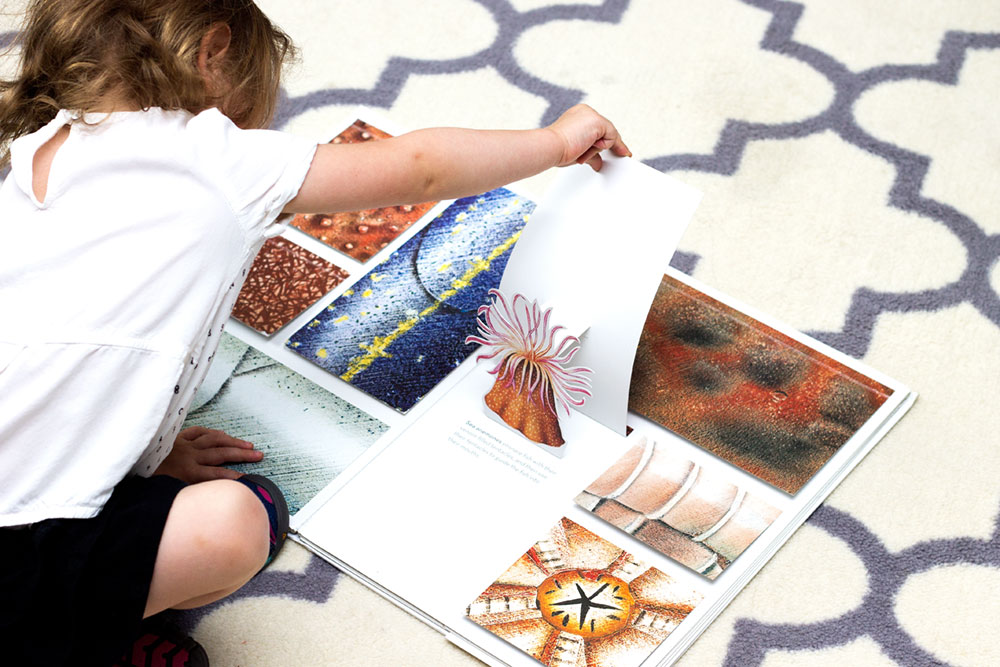 The Open Ocean is an engaging Montessori-friendly books about ocean wildlife geared specficially for young toddlers and preschoolers.