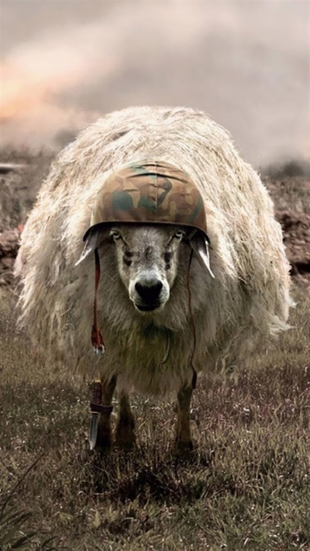 Lonely Girl Wallpaper Com Sheep With Military Helmet Iphone 6 6 Plus And Iphone 5