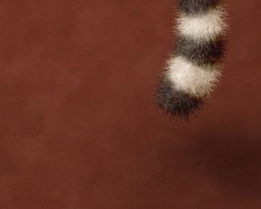 Furry Tail