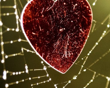 Love Heart On The Cobweb