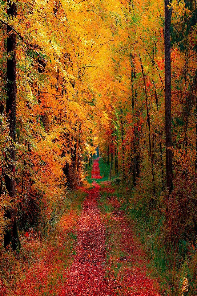 Autumn Falling Leaves Live Wallpaper Autumn Woods And Road Wallpaper Free Iphone Wallpapers