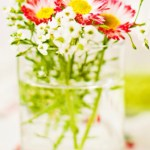 Fresh Flowers In The Glass Cup
