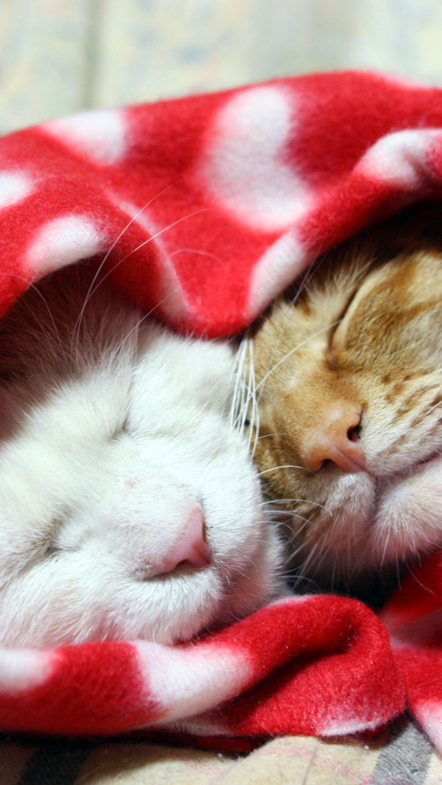 Cute Girly Wallpapers For Iphone 5c Sleeping Cats Iphone 6 6 Plus And Iphone 5 4 Wallpapers