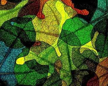 Colorful Abstract Leaves