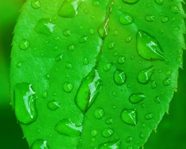 Fresh Green Leaf with Dew Drops